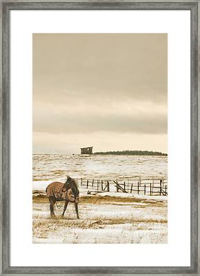 Framed Print featuring the photograph Plaid And Snow by Sandi Mikuse