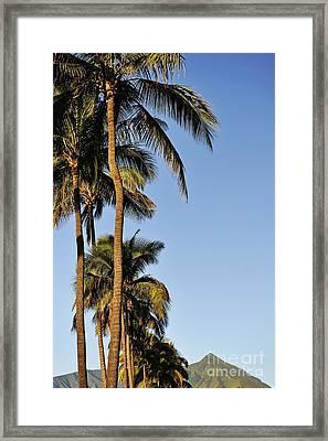 Plam Trees At Sunrise Framed Print by Sami Sarkis