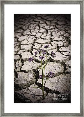 Plant Growing Through Dirt Crack During Drought   Framed Print by Jorgo Photography - Wall Art Gallery