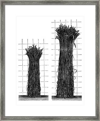 Plant Growth Experiments Framed Print by Science Photo Library