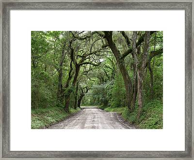 Plantation Road II Framed Print