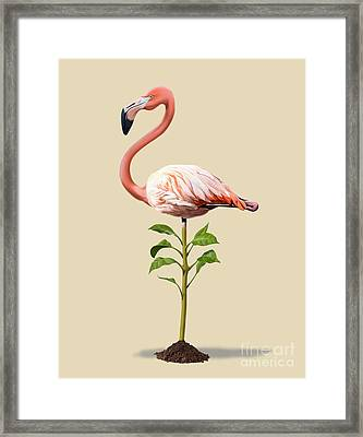 Planted Colour Framed Print