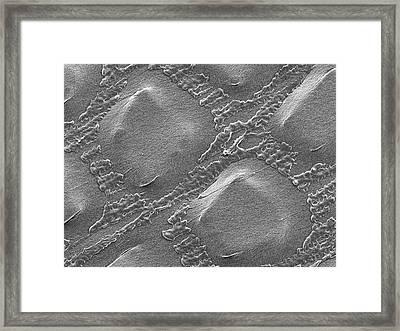 Plastic Wrap Framed Print by Dennis Kunkel Microscopy/science Photo Library