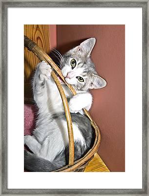 Playful Kitten Framed Print by Susan Leggett