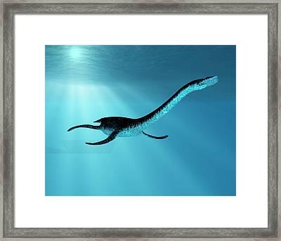 Plesiosaurus Dinosaur Framed Print