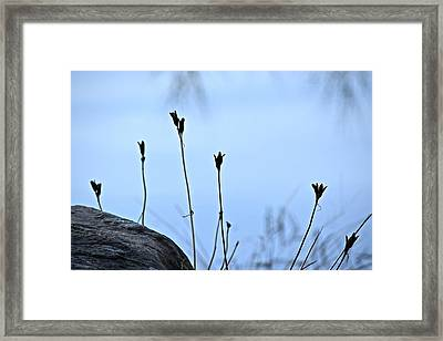 Pods On Pond Framed Print