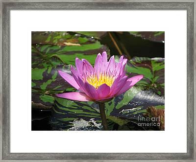 Pond Series Framed Print