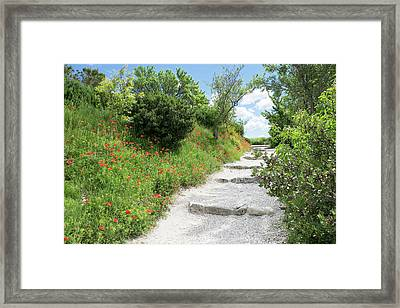 Poppies On The Grounds Of Les Baux Framed Print by Emily Wilson
