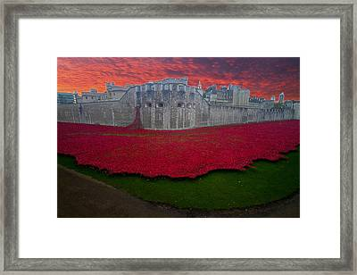 Poppies Tower Of London Framed Print by David French