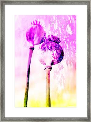 Poppy Buds Framed Print by Tommytechno Sweden