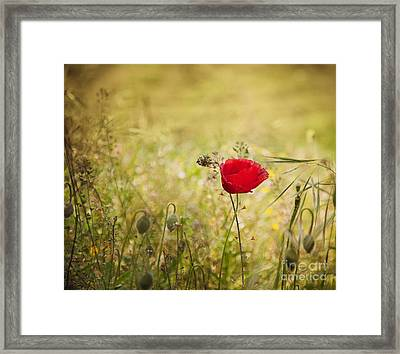 Poppy Flower Framed Print by Mythja  Photography
