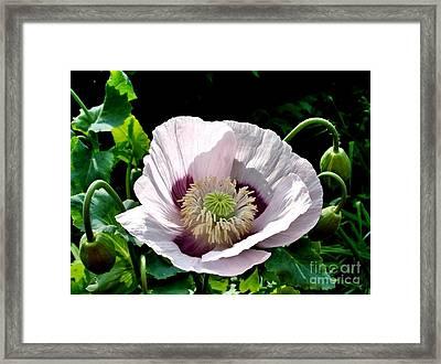 Poppy  Framed Print by Katy Mei