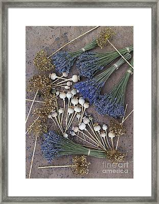 Poppy Seed Pods And Dried Lavender Framed Print
