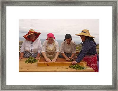 Porto Formoso Tea Gardens Framed Print