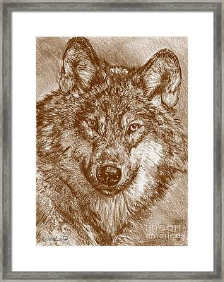 Portrait Of A Gray Wolf Framed Print