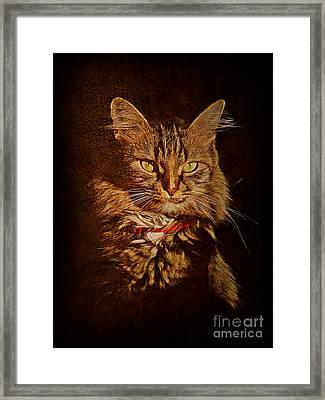 Portrait Of A Tramp Cat Framed Print