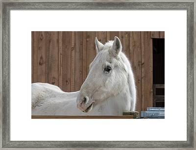 Portrait Of A White Horse Framed Print