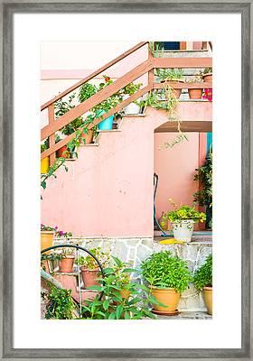 Pot Plants Framed Print