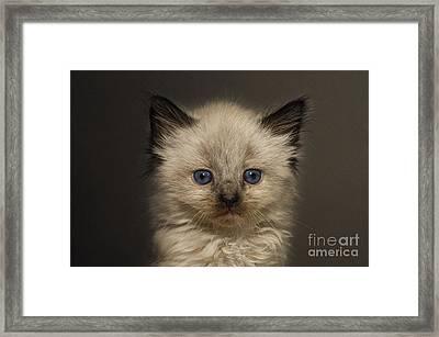 Precious Baby Kitty Framed Print