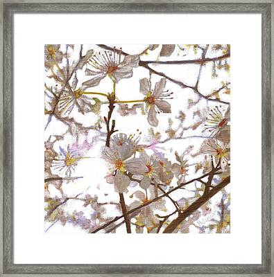 Prelude Framed Print by Helen White