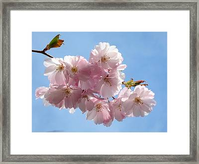 Pretty In Pink Framed Print by Lena Photo Art