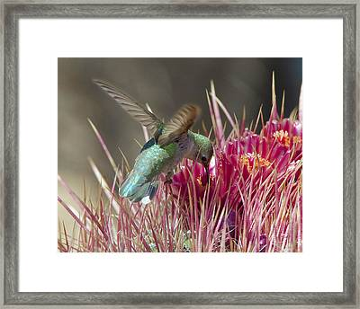 Prickly Delicacy Framed Print