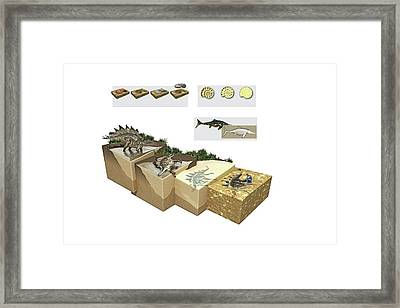 Process Of Fossilization Framed Print