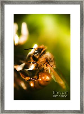 Process Of Pollination Framed Print by Jorgo Photography - Wall Art Gallery