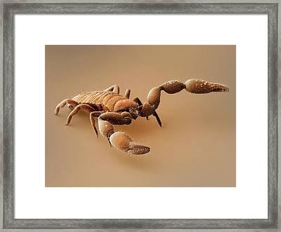 Pseudoscorpion (sem) Framed Print