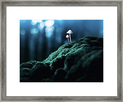 Psychedelic Mushrooms Framed Print by Misha Kaminsky
