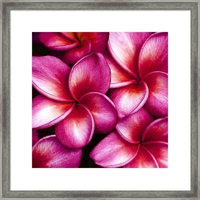 Pua Melia Framed Print