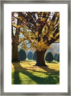 Public Garden Fall Tree Framed Print