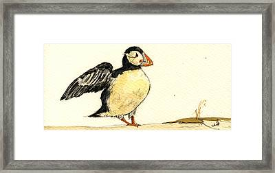 Puffin Bird Framed Print
