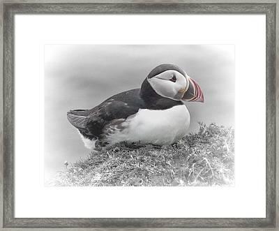 Puffin Framed Print by Lynn Bolt