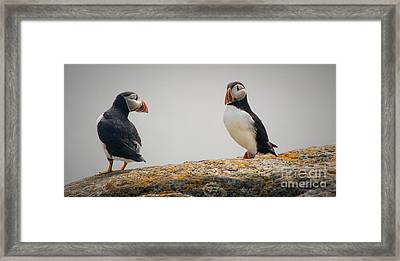 You Talking To Me? Framed Print by Jim  Hatch