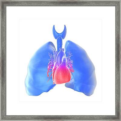 Pulmonary Hypertension, Artwork Framed Print