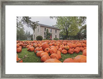 Pumpkin Farm  Framed Print