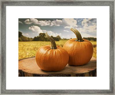 Pumpkins Framed Print by Amanda Elwell