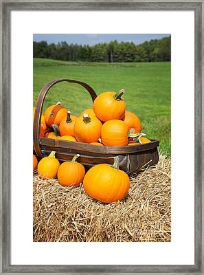 Pumpkins For Sale Framed Print by Jane Rix