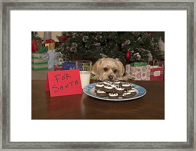 Puppy Checking Out Christmas Cookies Framed Print