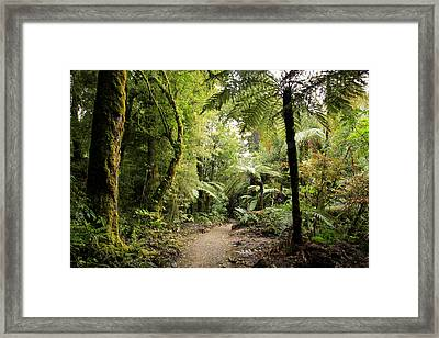 Pureora Forest Framed Print by Les Cunliffe