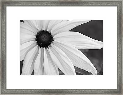 Purity Coneflower, Quincy California Framed Print by Tirza Roring