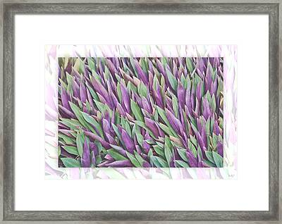 Framed Print featuring the photograph Purple And Green by Holly Kempe
