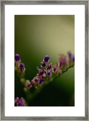 Purple Bud Framed Print