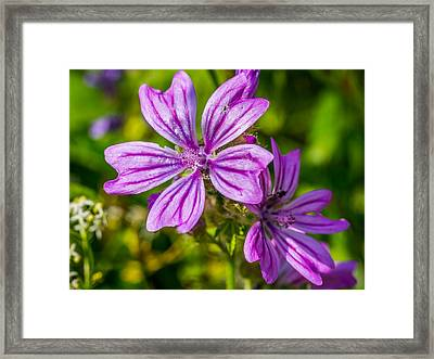 Framed Print featuring the photograph Purple Flower. by Gary Gillette