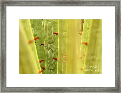 Puya Raimondii Leaf Patterns 2 Framed Print by James Brunker