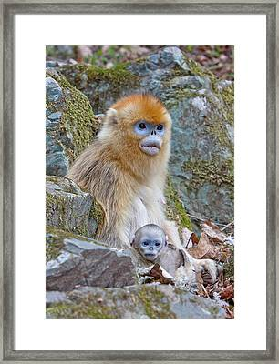Qinling Mountains, China, Female Golden Framed Print