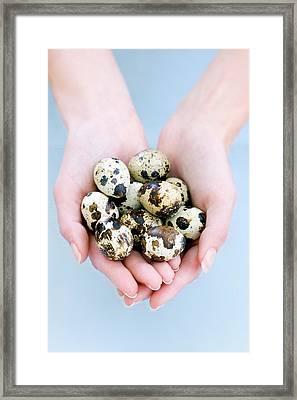 Quail Eggs Framed Print by Ian Hooton/science Photo Library