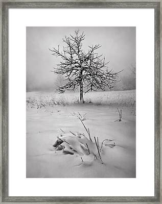 Quiet Thoughts Framed Print