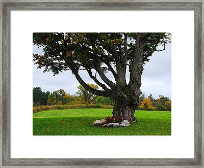Quiet Tree Framed Print by Stephanie Grooms